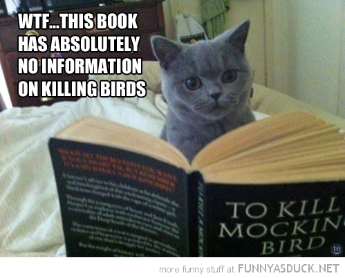 funny-reading-cat-kill-mocking-bird-pics