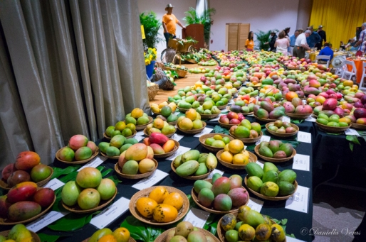 Mango-Festival-31
