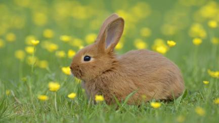 how-will-i-know-if-my-female-rabbit-is-pregnant_b3d0c77e-f3da-44c5-a490-0e0ef5f33612